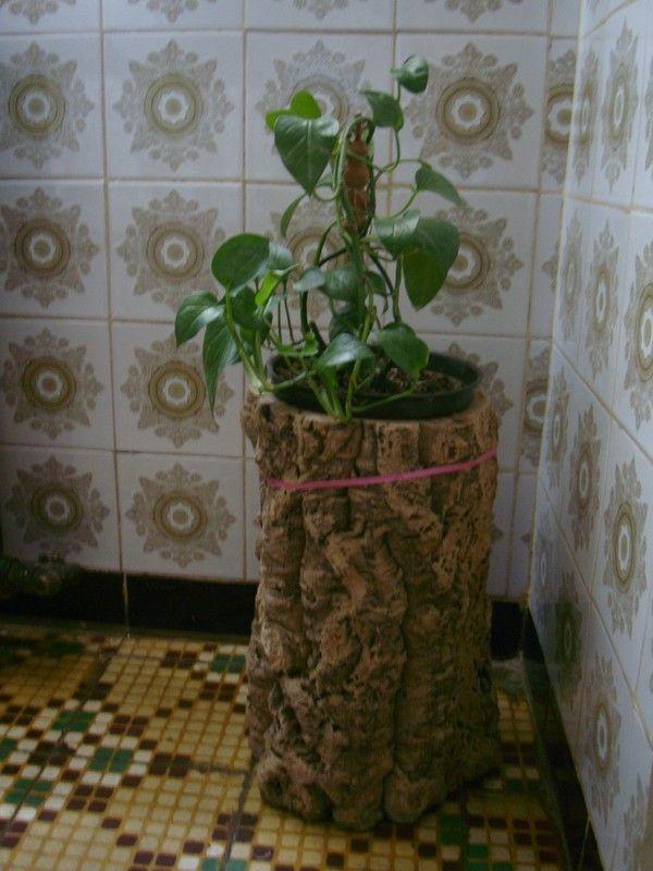 Plantes appartement for Plante appartement